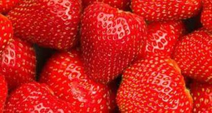 Picture of Tons of Egyptian strawberries from Green Vision